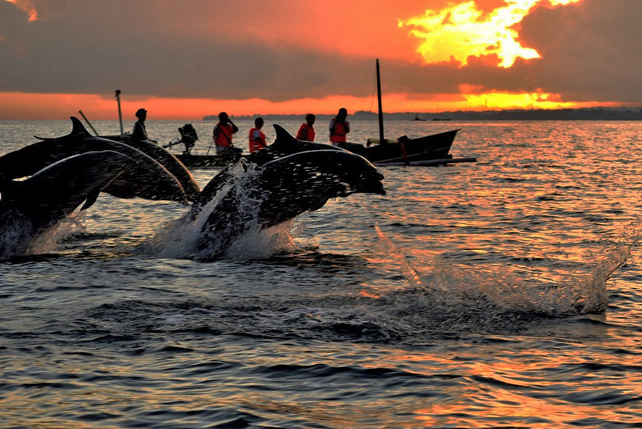 Sunrise Dolphin at Lovina Beach - Bali A1 Driver